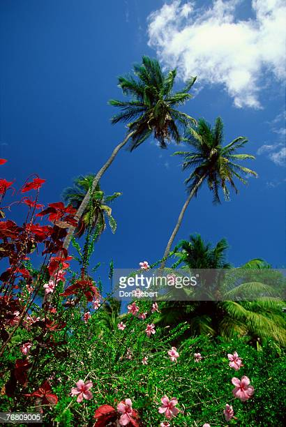 Palms and flowers