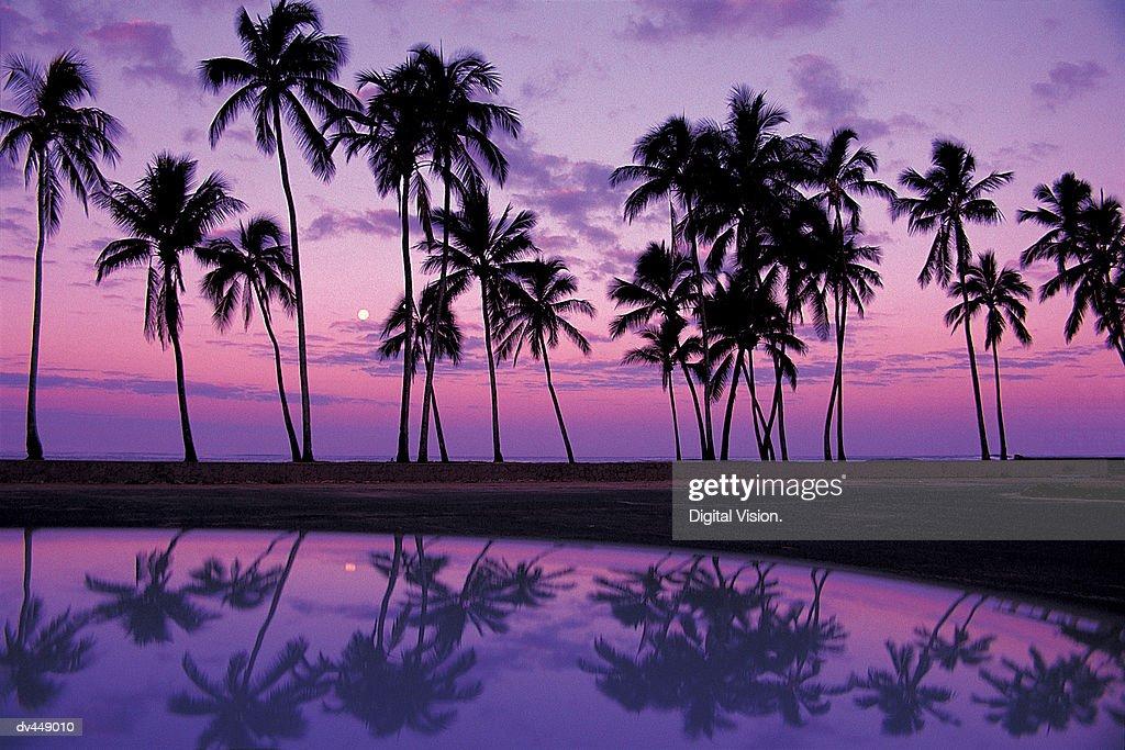 Palms at Sunset, Oahu, Hawaiian Islands : Stock Photo