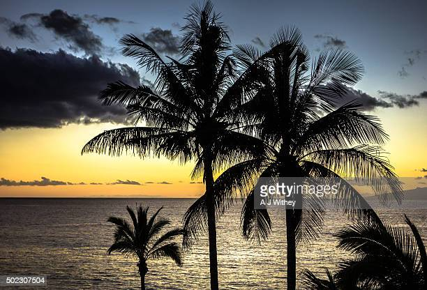 Palms at sunset