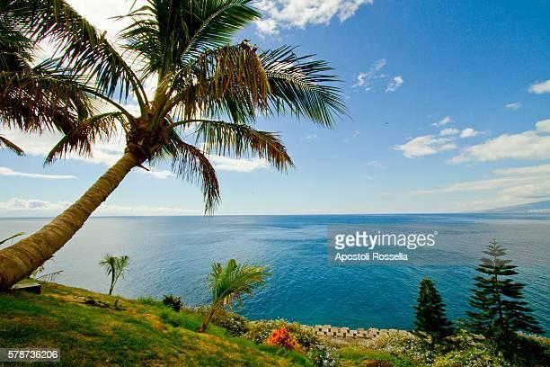 palms in Tenerife island