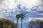 Palms, trees, clouds