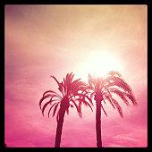 Palms trees