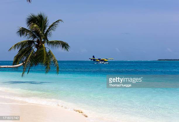 Palmtree and Sea-Plane