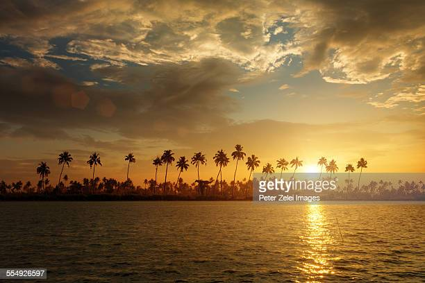 Palmtree silhouettes at sunset.