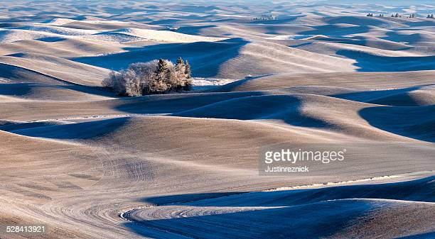 Palouse Hills in Frost