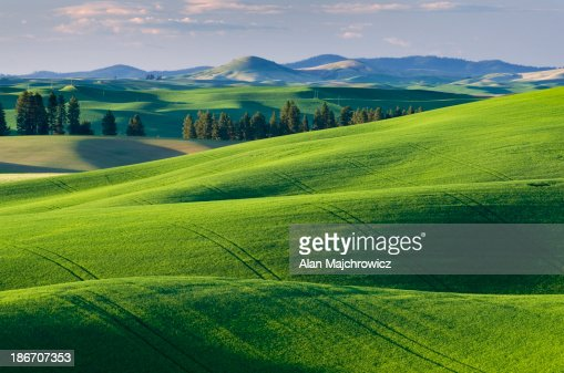 Palouse wheat fields Washington