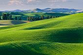 Palouse wheat fields Washington
