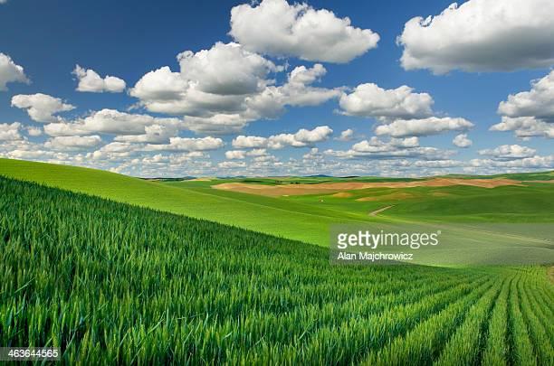 Palouse wheat fields, Washington