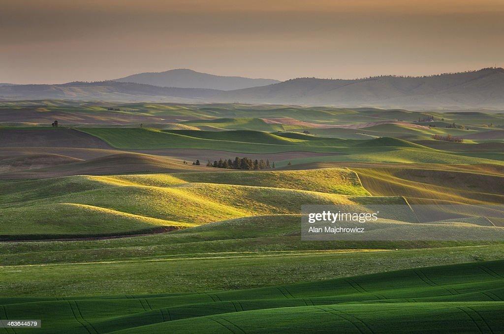 Palouse wheat fields, Washington : Stock Photo