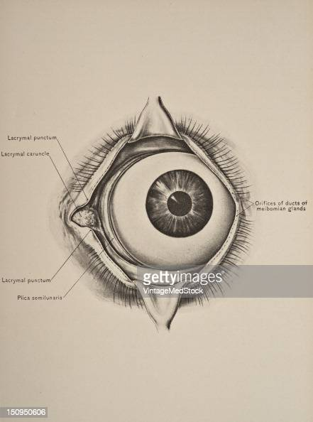 Palpebral fissure is the anatomic name for the separation between the upper and lower eyelids 1899 From 'The Treatise of the Human Anatomy and Its...