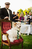 Pampered dog sitting on ornate chair at lawn party