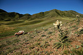 Panda Motorcar team Kun Liu and copilot Hongyu Pan race near the Bartogai lake near Almaty in Kazakhstan on July 15 during the 7th special stage of...