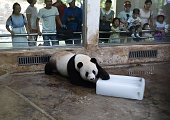 A panda plays an ice block at Wuhan Zoo on July 23 2016 in Wuhan Hubei Province of China The high temperature in south China's Wuhan City has reached...