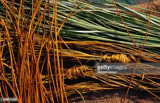 Pandanus or mandjim, dyed yellow and natural being prepared for basket weaving, Arnhem Land.