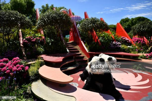 'Panda's' are pictured in the 'Chengdu Silk Road Garden' at the 2017 Chelsea Flower Show in London on May 22 2017 The Chelsea flower show held...
