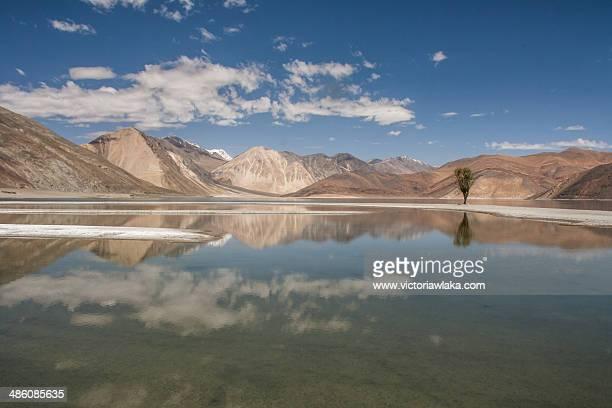 Pangong Lake with Tree