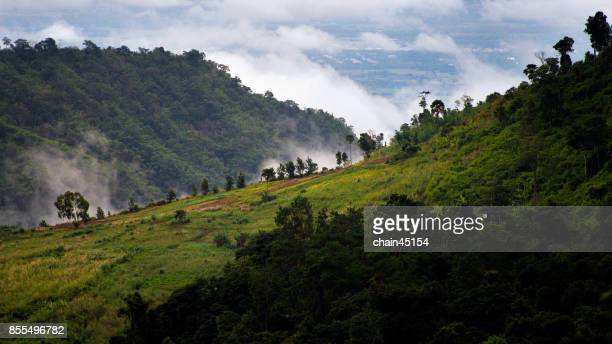 Panorama Aerial view of forrest with mountain hill and cloudy sky. Travelling concept.