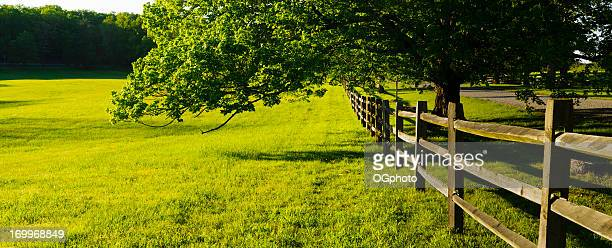 Panorama of a green field and fence