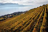 panorama of autumn vineyards in Switzerland View on Lavaux region by autumn day, Vaud