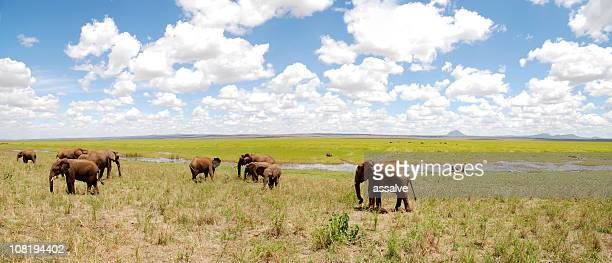 Panorama of Elephant Herd Grazing on African Plains