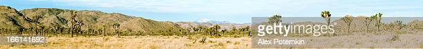 Panorama of Joshua Tree National Monument.