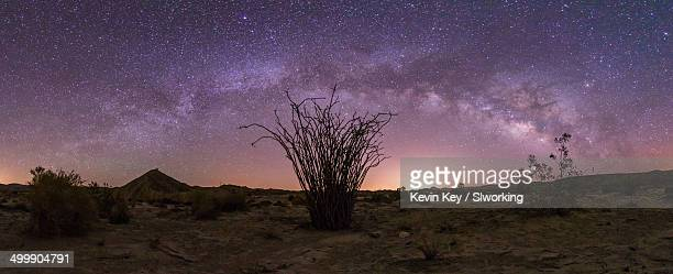 Panorama of the Milky Way over an ocotillo