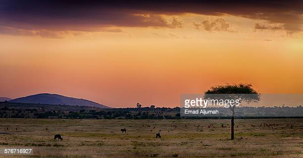 Panorama of the sunset over Masai Mara