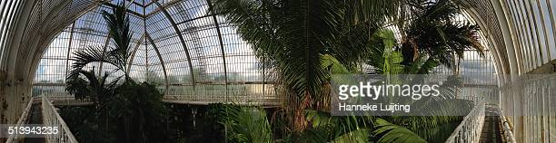 Panorama showing palm trees taken from a walkway at the top of one of the glasshouses in Kew Gardens in London UK