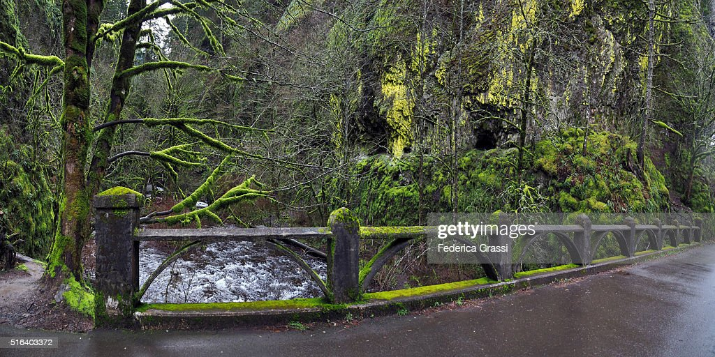 Panorama View of Bridge Covered with Moss at Oneonta Gorge, Oregon