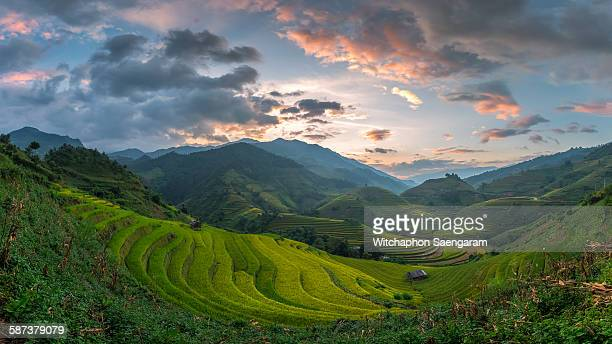 Panorama view of rice terrace field with sunset
