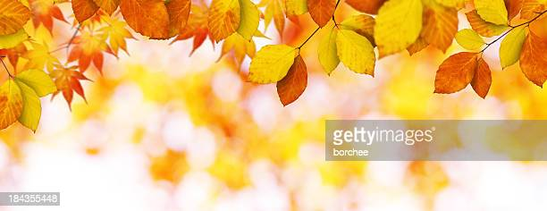 Panoramic Autumn Foliage