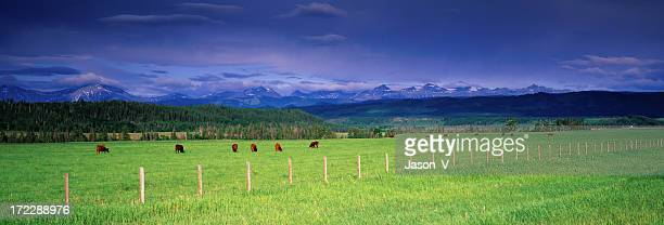 Panoramic Cattle Ranch