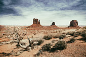 panoramic photo of the Monument Valley Park in Arizona in USA with vintage effect, tree and dry vegetation in the foreground