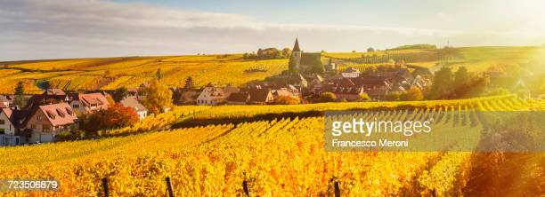 Panoramic rolling landscape with autumn coloured vines, Hunawihr, Alsace, France