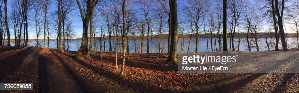 Panoramic Shot Of Bare Trees In Forest