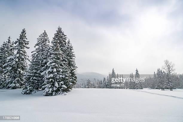 Vue panoramique sur le paysage de forêt d'hiver enneigé