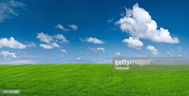 パノラマに広がる風景の春 49MPix XXXXL -meadow 、ブルースカイ