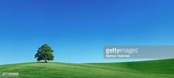Panoramic spring landscape 55MPix - XXXXL size