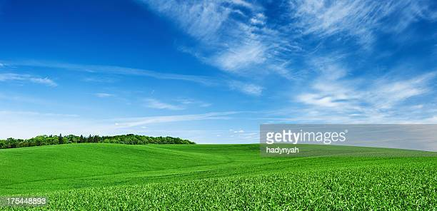 Panoramic spring landscape XXXXL 28 MPix- green field, blue sky