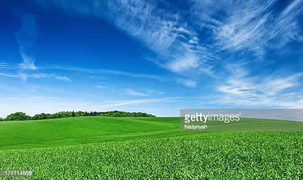 Panoramica XXXXL 45 MPix- primavera paesaggio verde campi blu cielo,