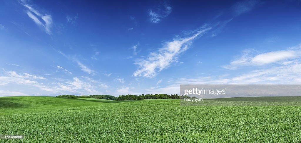 'Panoramic spring landscape XXXXL 68 MPix- green field, blue sky'