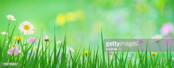 パノラマに広がる春の草地