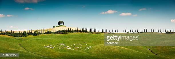 Panoramic Tuscany Landscape