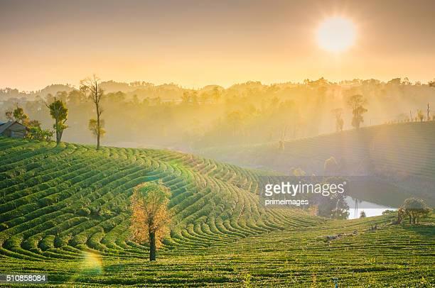 Panoramablick nebligen Morgen Sonnenaufgang in den Bergen im Norden von Thailand
