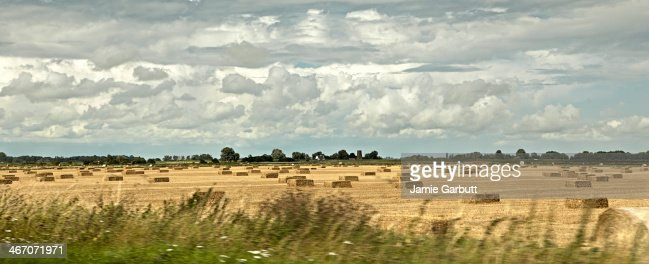 A panoramic view of a field with straw bales : Stock Photo