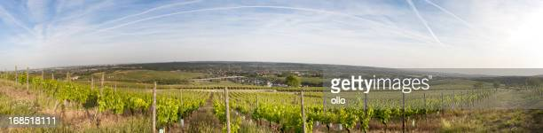 Panoramic view of a vineyard in the Rheingau, Germany
