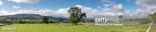 Panoramic view of countryside near Leyburn, Wensleydale, North Yorkshire