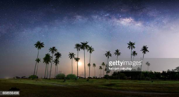 Panoramic view of Milky way and coconut palm trees.