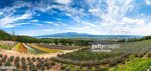Panoramic view of the flower field at Nakafurano, Hokkaido, Japan
