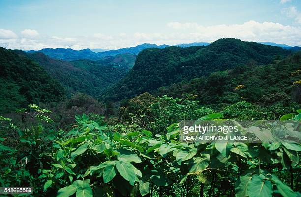 Panoramic view of the forestcovered Chiapas mountains Mexico
